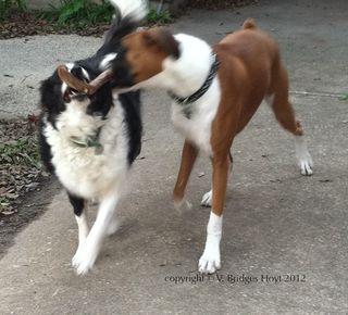 Dogs-photo-Brooke-Thor
