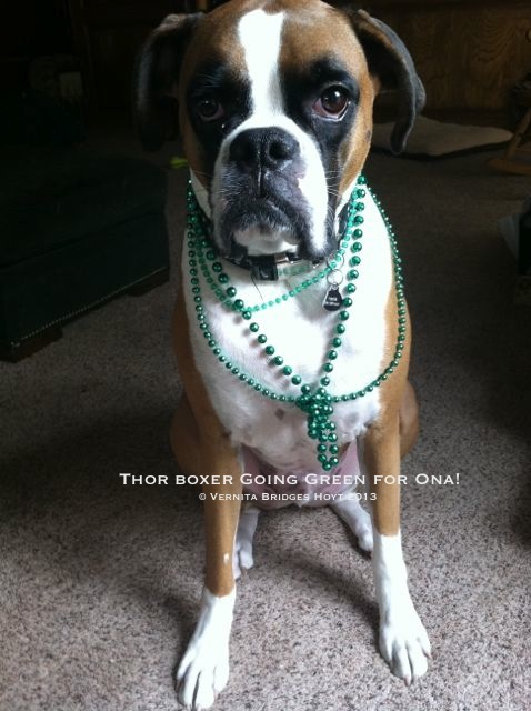 Dog-boxer-Thor-green-beads_5829